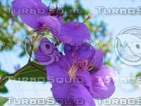 Purple Flower [visceral].tif